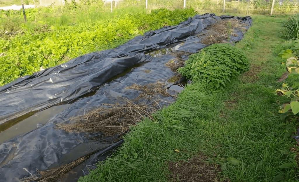 Bâche sur le sol du jardin